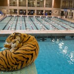 The Trinity Tiger oversees the lifeguards as they finish putting the bulkhead back together after the pool in the William H. Bell Center was completely drained, cleaned and de-rusted.