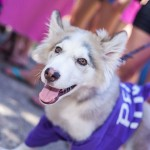 Luke, a poppy belonging to senior Holley Stuart, dons purple in honor of Rush Kick-Off last Friday.