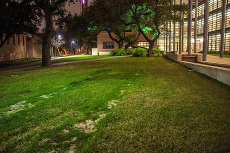 Tire ruts remain outside of Northrup after the San Antonio fire department conducted a fire equipment accessibility test, attempting to drive a fire truck near upper campus buildings during winter break. Photo by Anh-Viet Dinh.