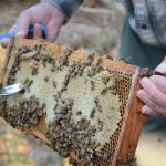 Director of environmental studies Richard Reed spends his sabbatical farming, beekeeping, and writing